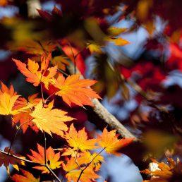 autumn-leaves-2913038_1920